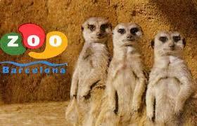 Zoo Barcelona barcelona zoo reloclub2000